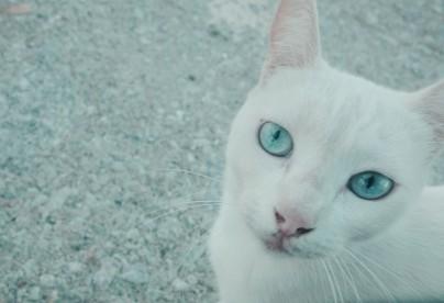 Bleu et blanc, les couleurs de la Grèce !