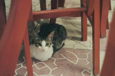 Petit chat gourmand !